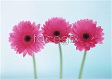 Link to1727 close-up Flowers