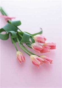 Link to1737 close-up Flowers