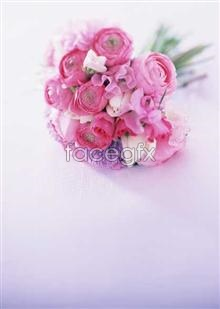 Link to1758 close-up Flowers