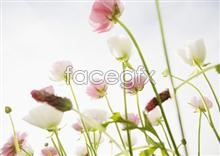 Link to2,056 close-up Flowers