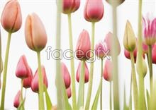 Link to2043 close-up Flowers