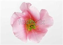 Link to447 close-up Flowers