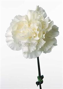 Link to530 close-up Flowers