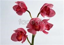 Link to59 close-up Flowers