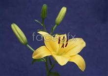 Link to876 close-up Flowers