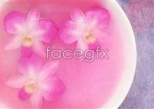 Link to883 close-up Flowers