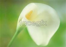 Link to887 close-up Flowers