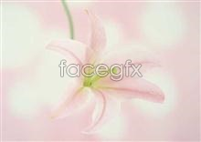 Link to889 close-up Flowers