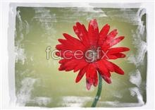 Link to898 close-up Flowers
