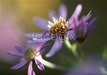 Link to640 of close-up Flowers