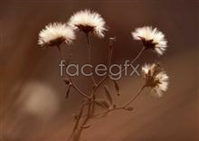Link to697 of close-up Flowers