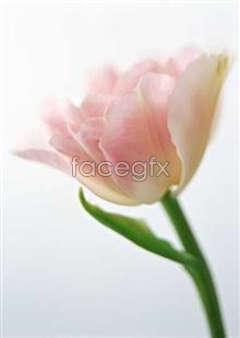 Link to1344 of close-ups Flowers