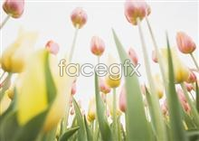 Link to2046 of close-ups Flowers
