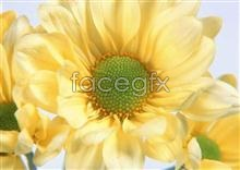 Link to106 features Flowers