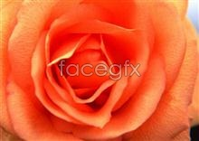 Link to173 features Flowers
