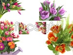 Link toFlowers hd pictures psd
