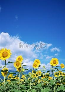 Link toFlowers pictures 2,109