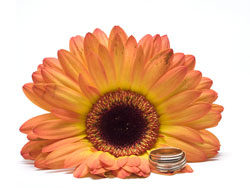 Link toFlowers with rings 05-hd pictures