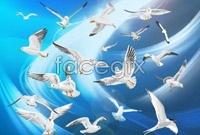 Link toFly bird vector