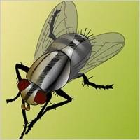 Link toFly bug vector