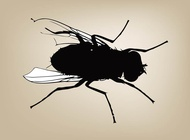Fly graphics vector free