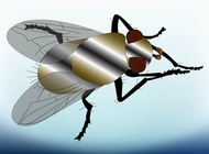 Link toFly vector free