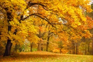 Link toForest in autumn maple leaf chinese restaurant picture