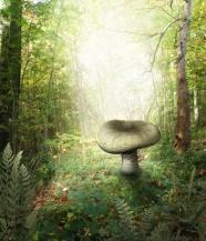 Link toForest mushroom cartoon picture download