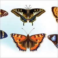 Link toFree butterfly vector