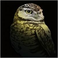 Link toFree vector owl