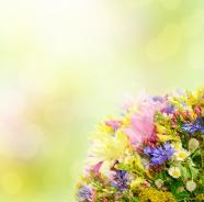 Link toFresh elegant flowers pictures