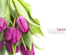 Link toFresh flowers backgrounds hd pictures 3