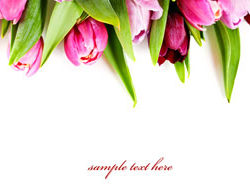 Link toFresh flowers backgrounds hd pictures 4