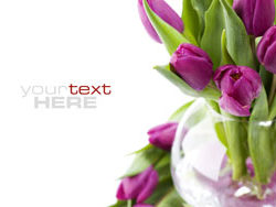 Link toFresh flowers backgrounds hd pictures 5
