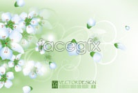 Fresh flowers backgrounds vector graphics