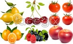Link toFresh fruit, vector material