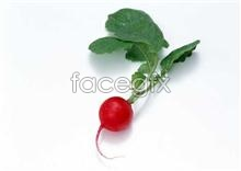 Link toFresh fruits and vegetables, 255