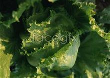 Link toFresh fruits and vegetables, 33