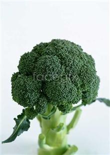 Link toFresh fruits and vegetables, 354