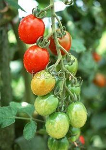 Link toFresh fruits and vegetables, 467