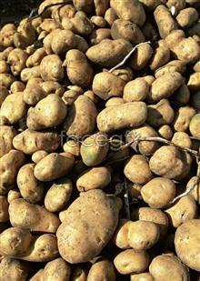 Link toFresh fruits and vegetables, 520