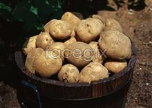 Link toFresh fruits and vegetables, 523