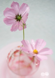 Link toFresh gesang flower pictures