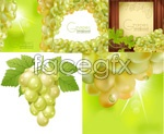Fresh grape vectors