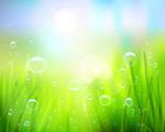 Link toFresh green grass background vector