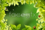 Link toFresh green leaf desktop psd