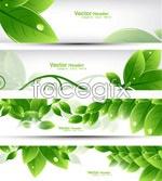 Fresh leaf banner vector