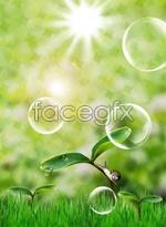 Link toFresh natural ingredients psd