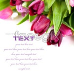 Link toFresh tulips 1 psd
