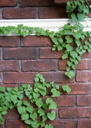 Link toFresh wall plants pictures